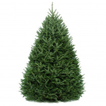 Cottage Farms Direct 6 ft. to 6.5 ft. Fraser Fir Real Christmas Tree