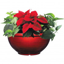 12 in. Bellina Bowl Poinsettia (In-Store Only)